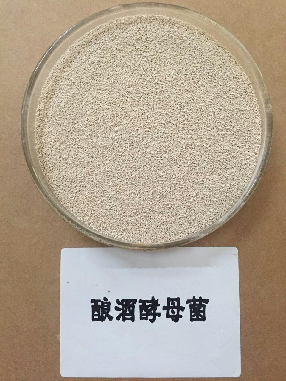 酿酒酵母菌